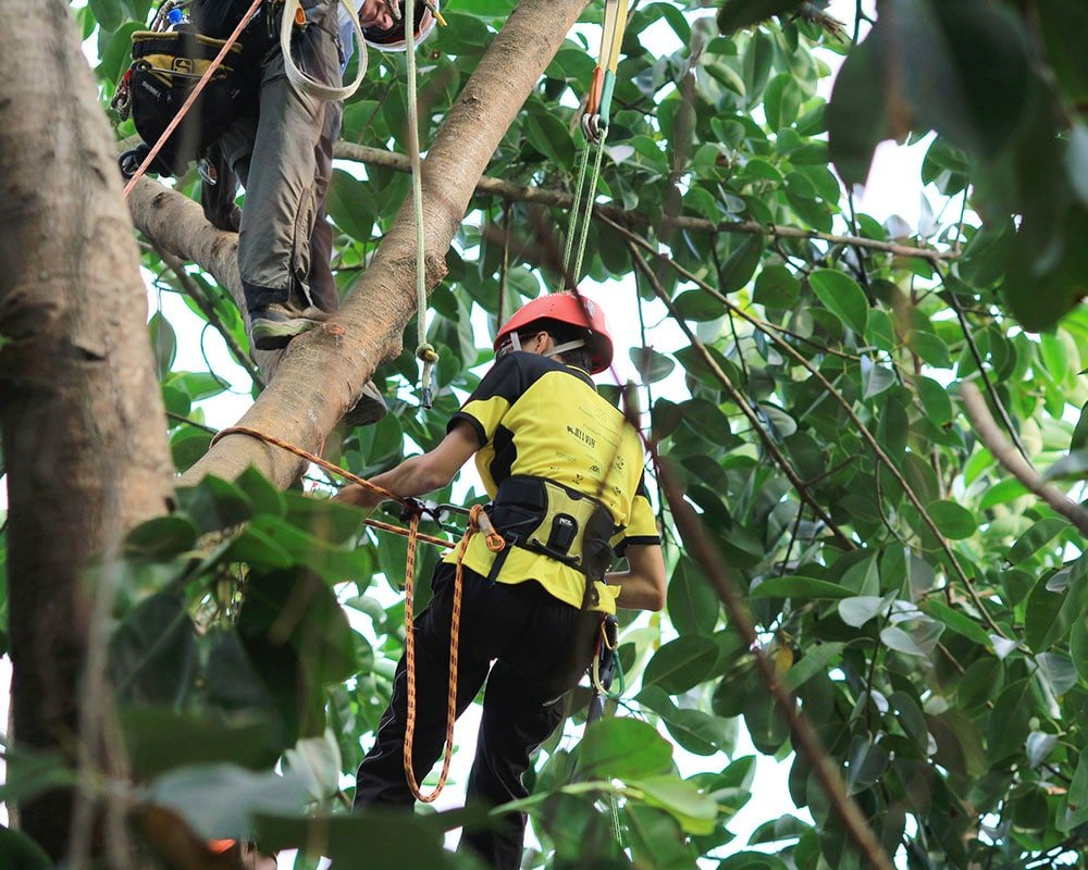 Tree Service Roseville - Emergency Tree Removal